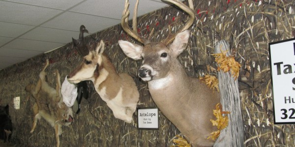 Lyle 39 s taxidermy studio hutchinson mn specializing in for Minnesota game and fish